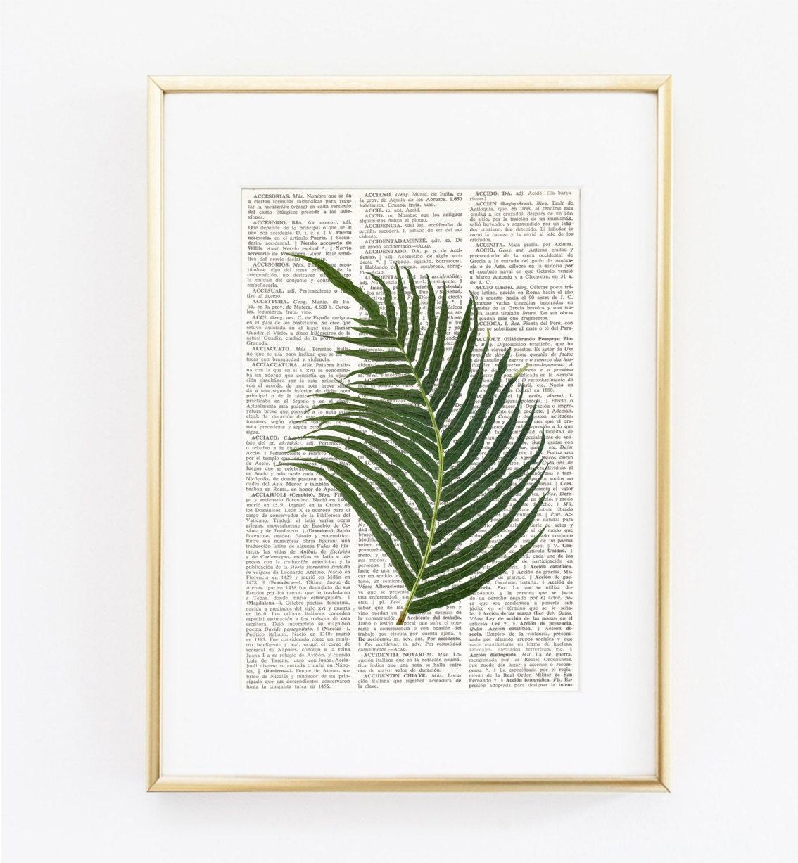 Lamina diccionario helecho hoja de helecho l minas de hojas - Laminas antiguas para cuadros ...