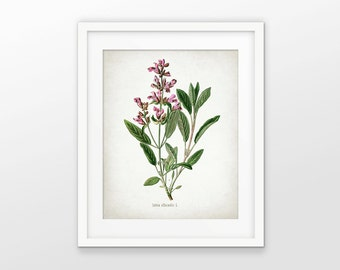 Sage Herb Art Print - Sage Herb Plant - Sage Herb Botanical - Kitchen Herb - Kitchen Decor - Single Print #1638 - INSTANT DOWNLOAD