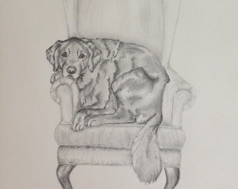 Graphite Sketched Pet Portraits