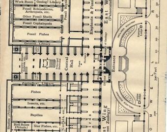 1919 Natural History Museum London England Antique Floor Plan