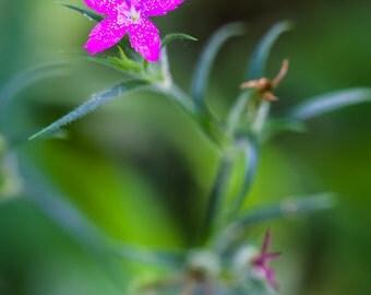 Pink flower,  flower photography, floral art, fine art photography.