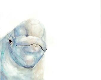 Baby Beluga - Print