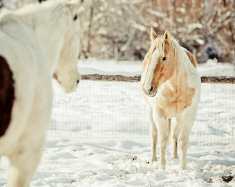 Two Horses in Winter, Animal Photography, Farm Photo, Snowy Rural Art, Snow, White