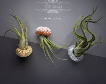 5 METALLIC OMBRE Shells // Gold Silver Copper Sea Urchin Jellyfish Air Plant gradient color fade