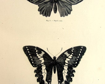 1860 Antique BUTTERFLY engraving print, vintage origina lINSECTS print, papillon lepidoptera plate illustration, butterflies natural history