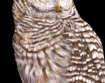 Barred Owl Colored Pencil Drawing