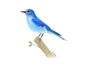 Watercolor bird painting archival print, mountain bluebird, blue bird artwork, animal and nature watercolor art, Idaho and Nevada state bird