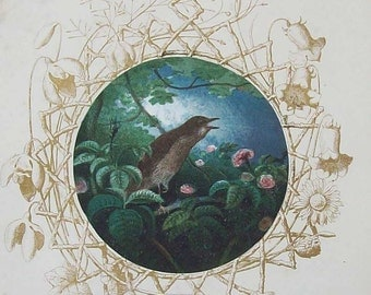Antique Nightingale illustration