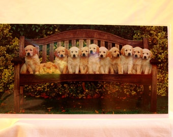 Golden Retriever Puppies on a Bench
