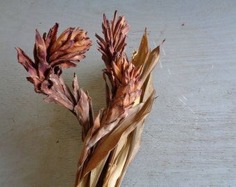 Dried Ginger tropical Flowers Greens Brown Tan Color Dried Leaves
