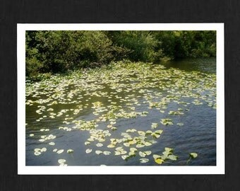 Lillipad Lake Photo Card