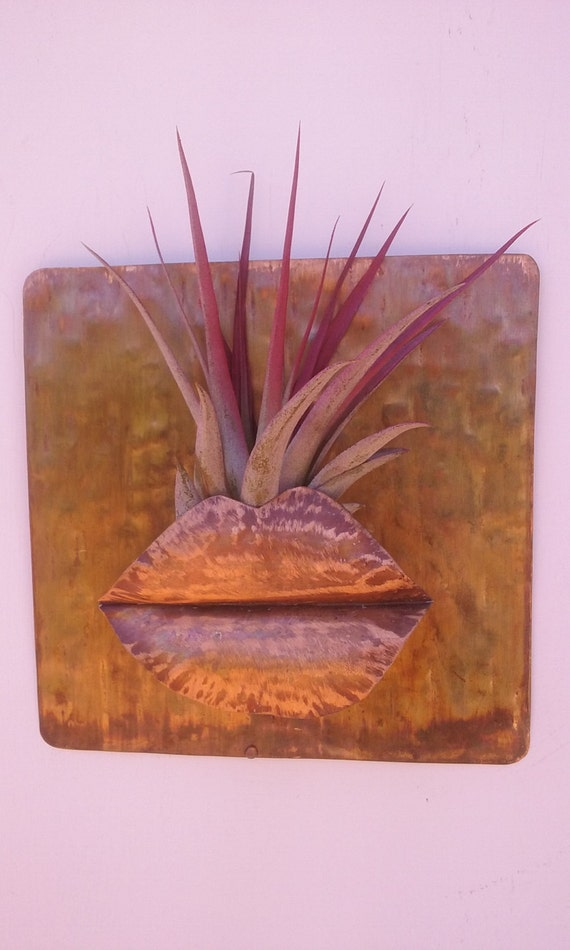 Metal Wall Art Copper Air Plant Holder  5 1/2 X 5 X 1/2 inch with Air Plant
