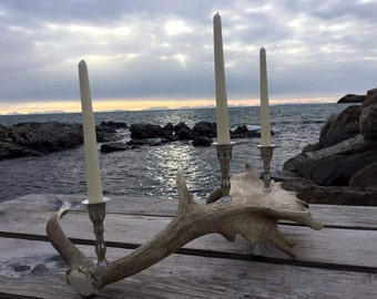 Handcrafted Scottish Fallow Deer Antler Candelabra