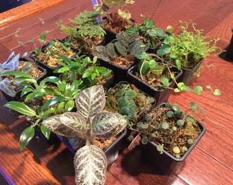Terrarium/vivarium plant package - grower's choice