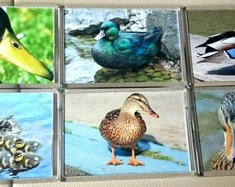Ducks/ Mallard Fridge Magnet, Set of 6/ Refrigerator Magnets / Kitchen Decor