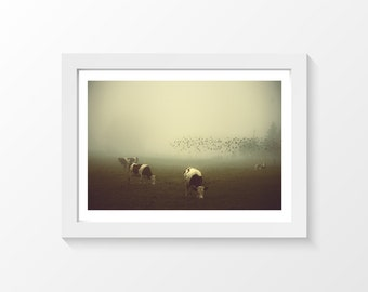 """Birds and Cows / Cow's field flock of birds mist fog photo printable downloadable wall art home decor to print yourself / A3 and 11""""x17"""""""