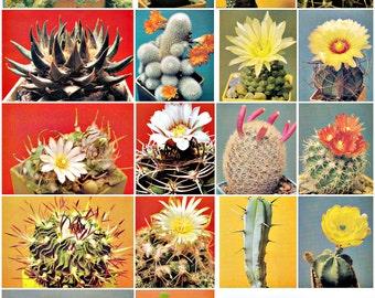 Set of 18. Soviet Postcards.   Cactuses. Photo Bulavskogo. Planet. Moscow, 1990