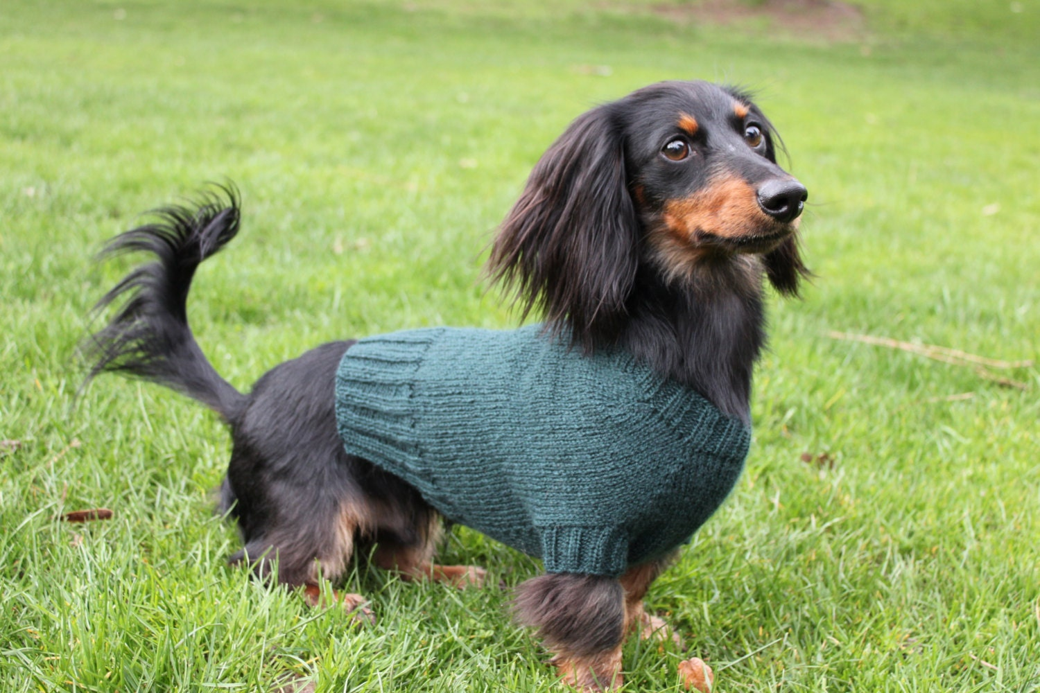 Knitting pattern mini dachshund dog sweater cloud 9 pet this is a digital file bankloansurffo Gallery