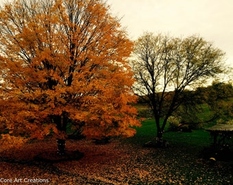 NY Orange Tree