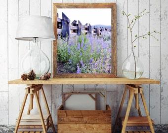 Lake Tahoe Print / Lupine Print / California Photography / California Print / Purple / Fine Art Photography
