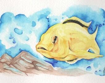 Big Yellow Cichlid    4x6 Original Watercolor