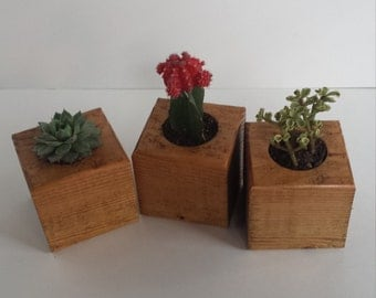 Wooden Small Succulent Plant Holder (Set of 3)