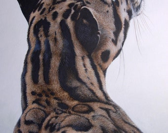 Limited Edition Print: Awan the Clouded Leopard
