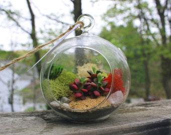 Succulent Hanging Terrarium Globe Kit