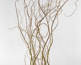 4-6 Fresh Cut Natural Curly Willow Branches 5ft