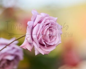 Pink Rose Flower Photography,Nature Print,Nature Photography,5x7,8x10,11x14,Nursery Art,UNFRAMED,Roses,Rose,Pink,Flower Print,Rose Print