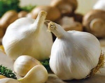 8 California Softneck Garlic Bulbs - Organic