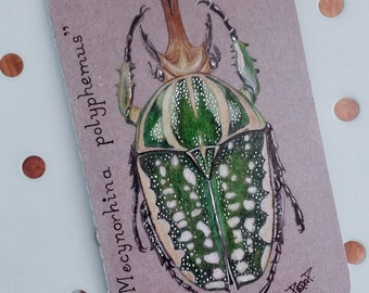 Original Hand painted, Moleskine, illustrated Mecynorhina Polyphemus, Bette Bug, illustrated Notebook, lined pages, Mini Pocket Journal