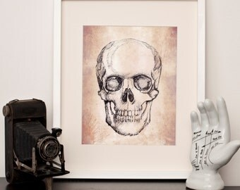 Vintage effect drawn skull - Art Print- Any size