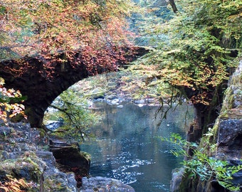 Scotland Forest Bridge Photography Print