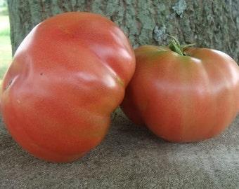 Heirloom Tomato- 1884- 78 day PINK Indeterminate- 25 seeds