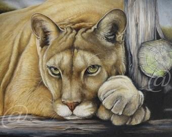 original, oil, painting, cougar, mountain lion, puma, cat, wildlife, nature, fine art, western, canvas, portrait, realistic, Jan Brown