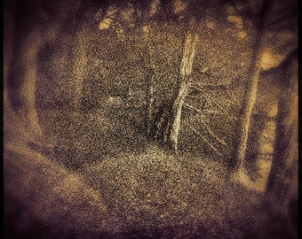 Forest 1am | 30cm x 30cm Fine Art Photographic Print, Dreamstate, Surreal, Sunrise, Trees, illustration style, Painterly