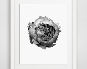 Printable Art, Flower Prints, Flower Art,  Floral, Art, Home Decor, Modern Decor, Gallery Wall, Prints, Printable Women Gift, Flower Poster