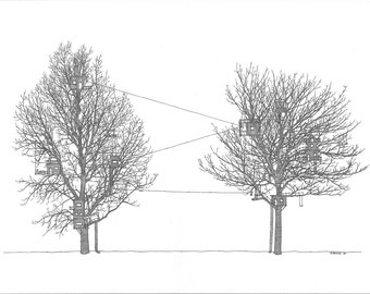 Neighbouring trees, Ink drawing art print, black and white wall art illustration, print from original.