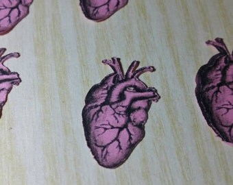 valentines day decor, anatomical heart conftti, anatomical heart decorations, die cut anatomical heart, anatomy print, anatomy die cut
