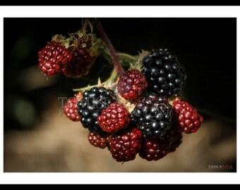 Photography print - blackberry