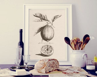 Kitchen art, Fruit print, Lemon print, Kitchen prints, Citrus print vintage, Botanical print vintage, Antique illustration, Download JPG PNG
