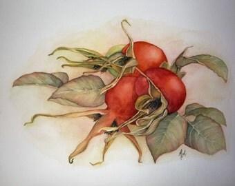 The WILD ROSE flowers fruit original watercolor painting