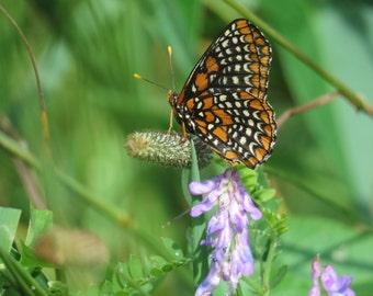 The Nature Nerds Rule 2016 Butterfly Calendar