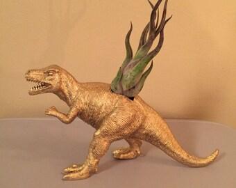 T rex planter with live air plant; desk decor; dorm decor ; bosses gift