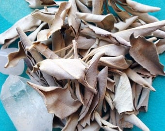 WHITE SAGE - Cleansing, Banishing, Protection, Purification, Smudging, Regeneration, Healing. For Smudge Spells, Ritual Kit, Wicca, Magick.