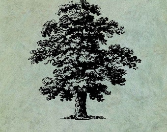 Oak Tree - Antique Style Clear Stamp