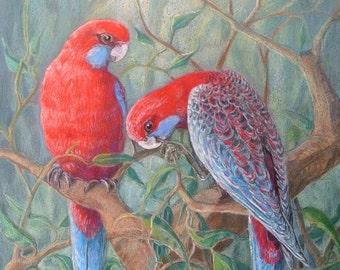 Australian Crimson Rosella Art Print