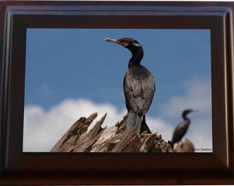 Neotroic Cormorant Framed