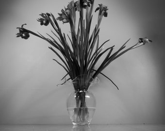 Irises - Black & White
